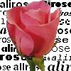 alirose1