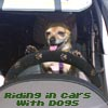 ridingwithdogs userpic