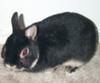 traven_bunny userpic