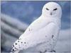 owlish userpic