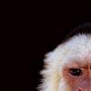 monkeyfondler userpic