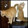 kitty_kitties userpic