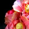 красота радость цветы сад огород