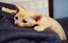 Uncle Reuben Klopek: Sad Kitty