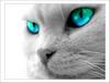 nconley userpic