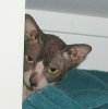 Usqueba: Peeking Stimpy