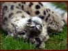 kiwi userpic