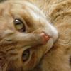 orange_kitty_ userpic