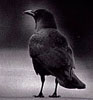 flash_crow userpic