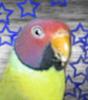 xkarayxbirdcage userpic
