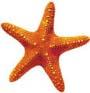 saxy_starfishy userpic