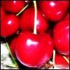 grlwhocriedwolf userpic