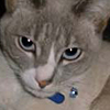 orchid_the_cat userpic
