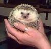 masked_hedgehog userpic