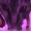 cheshi userpic