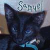 samuel_kitten userpic