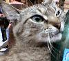 котище