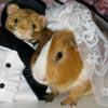 bunnybean userpic