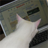 litterboxdiary userpic