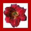 dreamer904 userpic