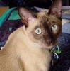 thomascat userpic