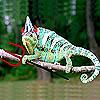 rottinginhell userpic