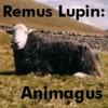 sheepybunbuns