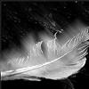 insilencewesit userpic
