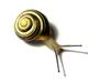 slowsnail userpic