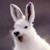 bunnycolonic userpic
