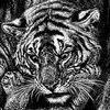 bengalwhite143 userpic
