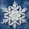 frostfalcon