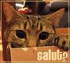 boxkitty, alo, salut