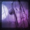 alula userpic