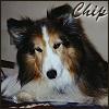 Jami: My dog Chip.