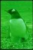 pinguinoverde