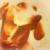 rustydog userpic