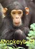 monkeybuttsmell userpic