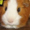 obese_bs userpic