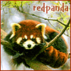 K: Beaded, K: Eeep, K: *huff*, Red Panda, K: Desperada