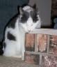 chickycat userpic