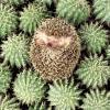 gods_hedgehog userpic