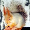 belka_rebelka userpic