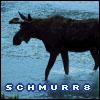 schmurr8 userpic