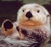 Martin: Otter