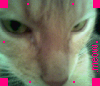 catnipaddiction userpic