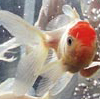ollibigfish userpic