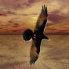 shadybird userpic