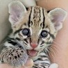 Stray Cat: yeah!