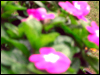 takeyourwings userpic